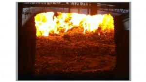 biomasa-foto-4